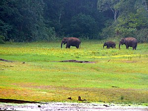 Forestry in India - Chhattisgarh and Odisha are other major forest covered states of India. Above elephants in Chandaka forest, Odisha.