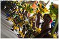 Encontro de Maracatus e Carnaval Mesclado - Carnaval 2013 (8495646230).jpg