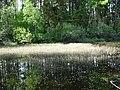 Entenweiher Hinterzarten 04.jpg