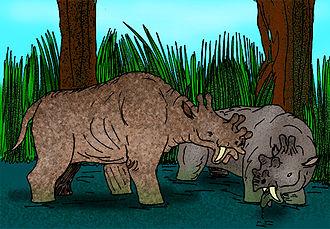 Dinocerata - Eobasileus (left) and Uintatherium (right).