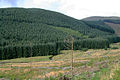 Eskdalemuir Forest - geograph.org.uk - 961039.jpg