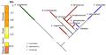 Evolution of Dicerorhinini.png
