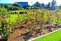 Exposition Park Rose Garden, Exposition Blvd. at Vermont Ave. University Park 7.jpg
