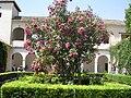 Fale - Spain - Granada - 93.jpg