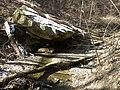 Fall Run Park in Shaler Township, late winter - 8.jpeg