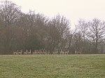 File:Fallow deer east of Culverley Farm, New Forest - geograph.org.uk - 142556.jpg