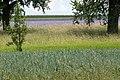 Farbige Streifen von Gräsern und Feldfrüchten zwischen zwei Bäumen.jpg