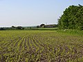 Farmland, Woodborough - geograph.org.uk - 844304.jpg