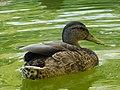 Fast duck.jpg