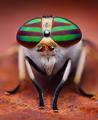 Female Striped Horse Fly (Tabanus lineola).png