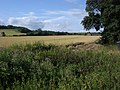 Field by Dyer's Hall Farm - geograph.org.uk - 1552961.jpg