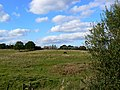 Field near Sheepslaight Plantation, Stanton Fitzwarren, Swindon - geograph.org.uk - 1526512.jpg