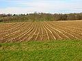 Field of Stalks near Halland Park Farm - geograph.org.uk - 323268.jpg