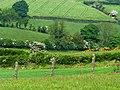 Fields near Holywood (2) - geograph.org.uk - 824355.jpg