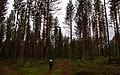 Finland 2015-06-19 (19184341251).jpg
