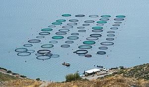 Mariculture - Image: Fish farm Amarynthos Euboea Greece