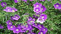 Fleur226.jpg