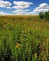 Flickr - Nicholas T - Prairie Walk (1).jpg