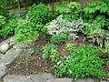 Flickr - brewbooks - Our Garden - May, 2008 (12).jpg