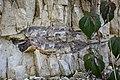 Flint Ponte di Veja 3.jpg