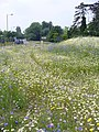 Floral Roundabout - geograph.org.uk - 460913.jpg