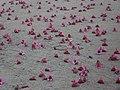 Flores - panoramio (13).jpg