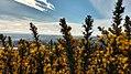 Flores cerro PLC.jpg