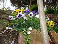 Flores en cantero2.jpg