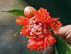 Flower & its bud I IMG 3379.jpg