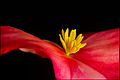 Flower (5920506737).jpg