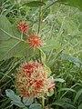 Flower challenge - geograph.org.uk - 1446820.jpg