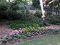Flowers at Falls Park on the Reedy, Greenville SC June 2019.jpg