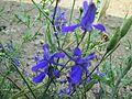 Flowers in Monsoon 16.JPG