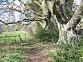 Footpath beside River Nadder - geograph.org.uk - 740764.jpg