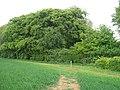 Footpath meets bridleway - geograph.org.uk - 1925566.jpg