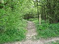 Footpath through Hope Shaw Wood - geograph.org.uk - 1268998.jpg