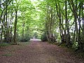 Footpath through the Woods - geograph.org.uk - 167048.jpg