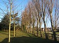 Footpath to the church, passing line of trees - geograph.org.uk - 1071466.jpg