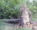Forêt de Soignes 03.JPG