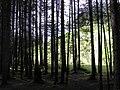 Forest (305749559).jpg