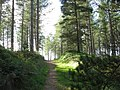 Forest Walk - geograph.org.uk - 255635.jpg