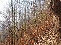 Forest at kurintar.jpg