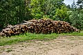 Forest in Minsk (June 2020) 6.jpg