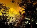 Forest in Peepal Khoont.jpg