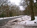 Forest road in the snow - geograph.org.uk - 1173103.jpg