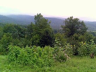 Vanadzor - Forests around Vanadzor
