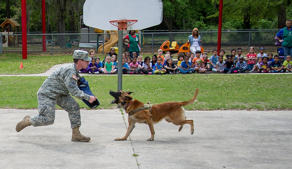File:Fort Stewart's dog and pony show, without the ponies ...