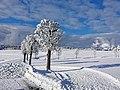 Frauenwald Winterschönheit.jpg