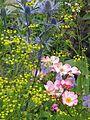 Front garden - Flickr - peganum (6).jpg