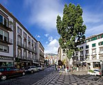 Funchal, Madeira - 2013-04-03 - 90144694.jpg